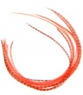 Corail fluo